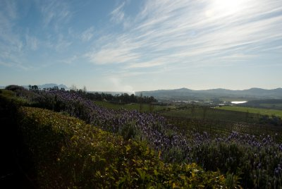 View from Ernie Ells winery in Stellenbosch.