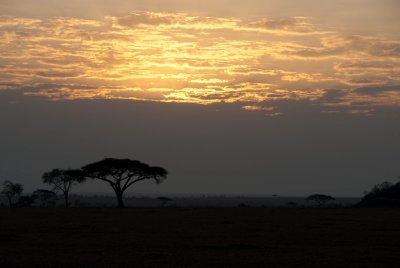 Sunrise in the Serengeti.