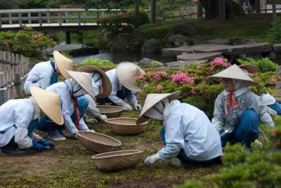 Gardeners working hard in Kanazawa's Kenrokuen Garden, which wasn't as colorful as we were expecting. Apparently we were visiting Japanese gardens in the wrong season.