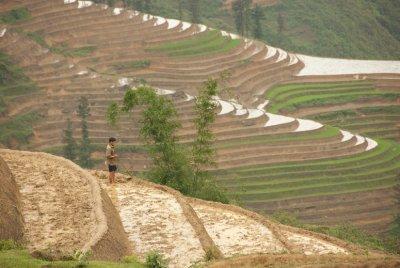 Sapa landscape 2