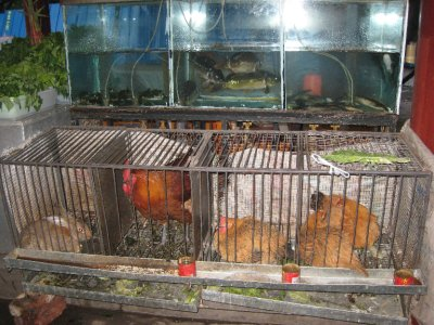 It is common to see livestock outside of restaurants. Before our meal there were two rabbits in this cage. Who ordered that?!