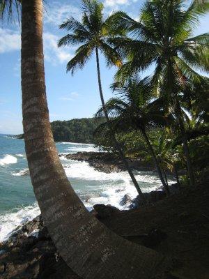 Itacare, palms 3