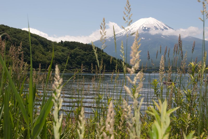 Mt. Fuji with more grass