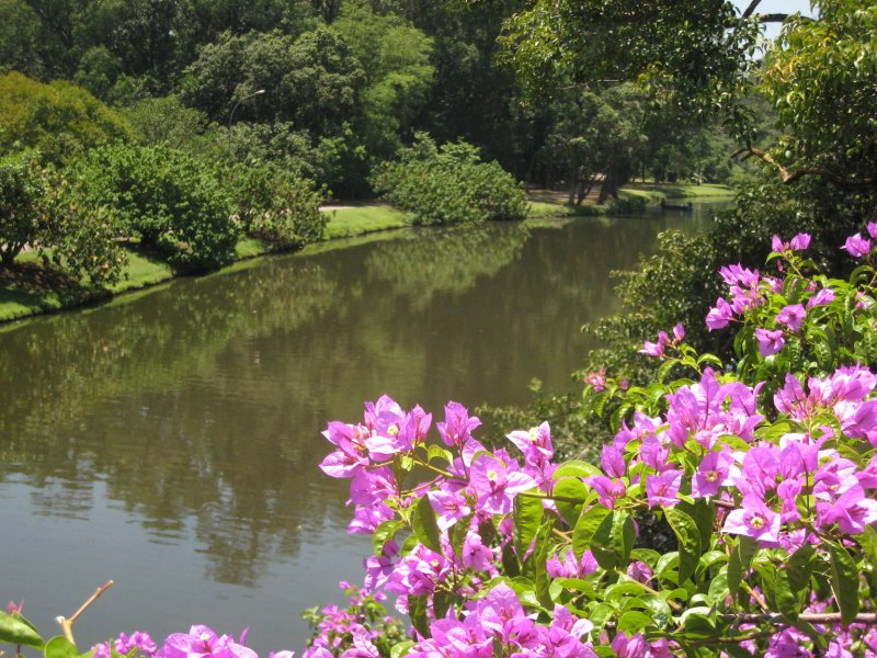 Park river and flowers