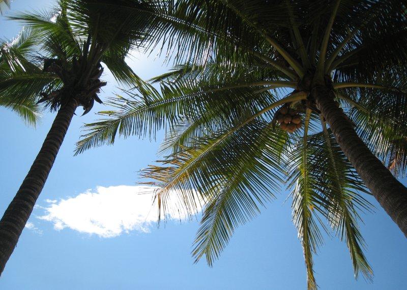Santa Teresa Palms