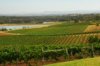 AU26 vineyard in Hunter Valley