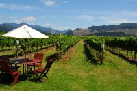 NZ 101: Marlborough wine region