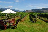 NZ 101: Marlborough wine region