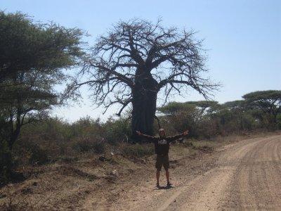 Baobab_Tree.jpg