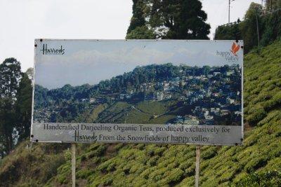 Happy_Tea_Darjeeling.jpg