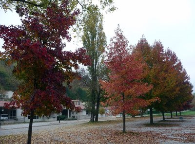 Autumn Trees in Cuxac