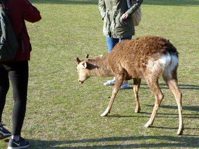 Bowing_deer.jpg