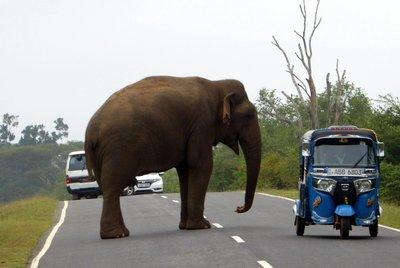 Elephant_beggar.jpg