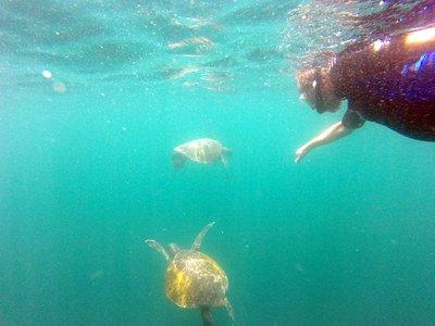 Jim_chasing_the_turtles.jpg