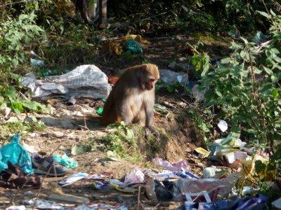 Monkey_in_garbage.jpg