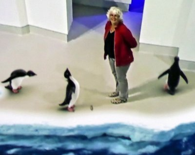 Penguin_Parade.jpg