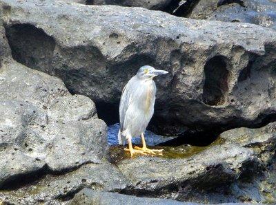 Sea_bird.jpg