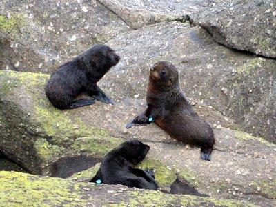 Seal_Colony.jpg