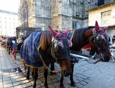 Viennese_horses.jpg
