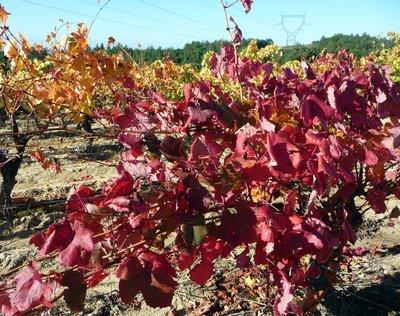 autumn_vines.jpg