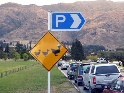duck_parking.jpg