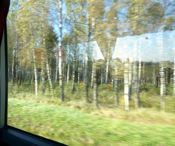 large_Birch_forests.jpg