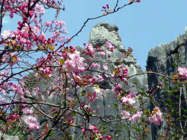 large_Blossom_time.jpg