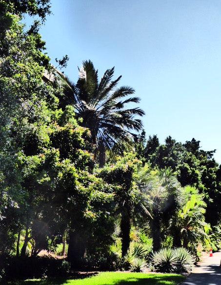 The Garden Of Adelaide Blissful Adventures