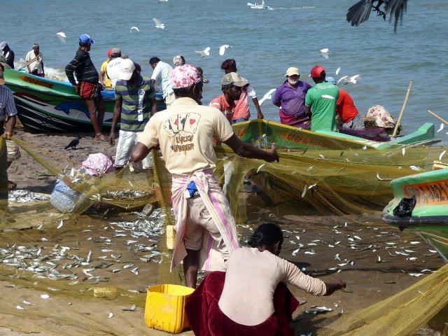 large_Fishing_in_Negombo.jpg