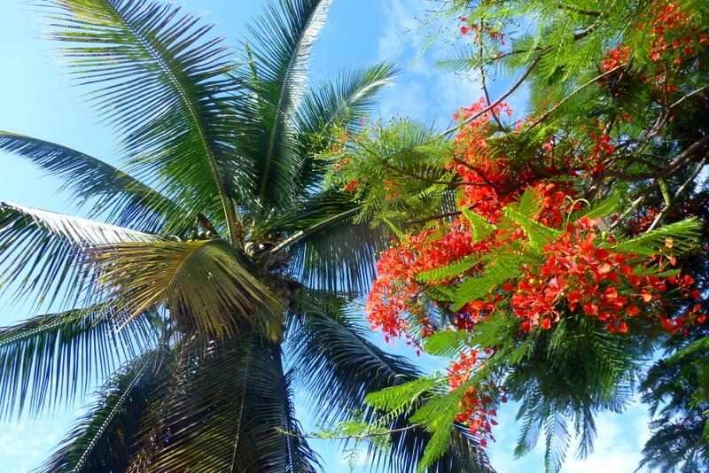 large_Flora_of_Santa_Cruz.jpg