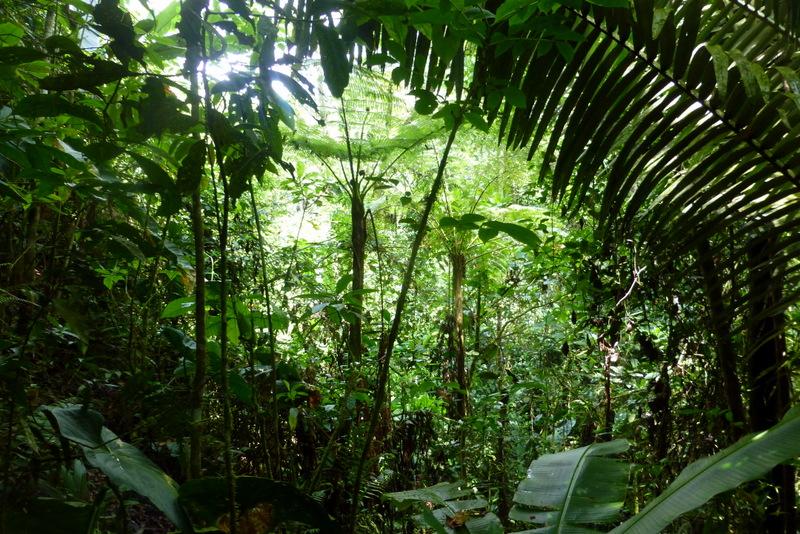 large_Jungle_area.jpg