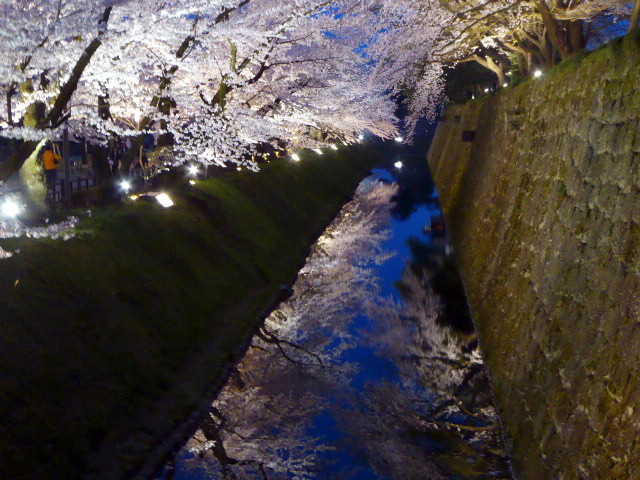 Cherry Blossom over moat