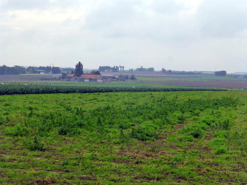 large_Peaceful_f..in_Flanders.jpg