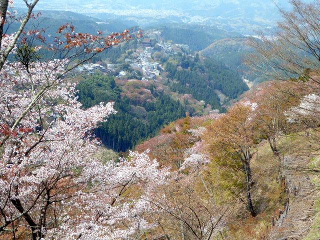 large_Sakura.jpg