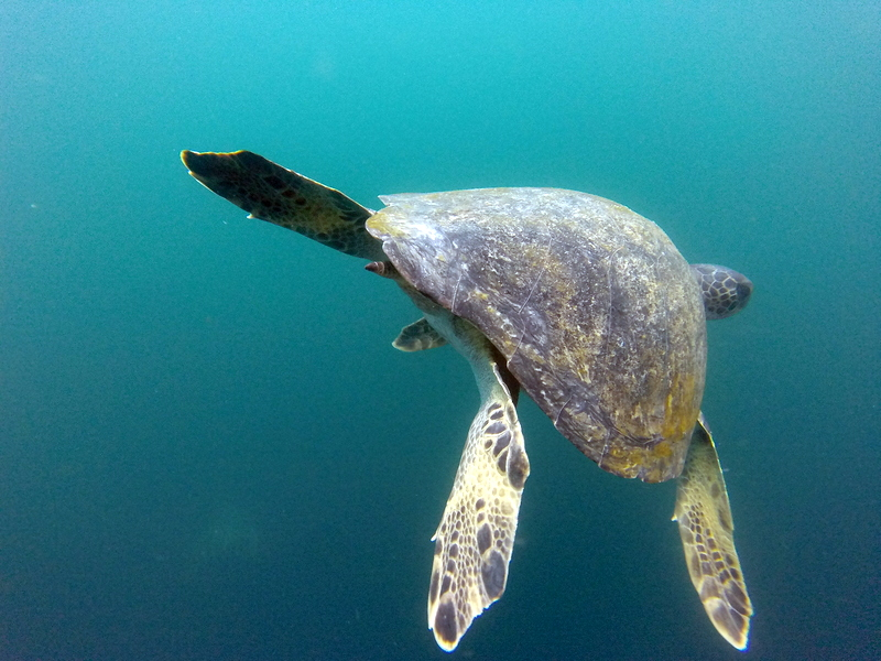 large_Sea_turtle.jpg