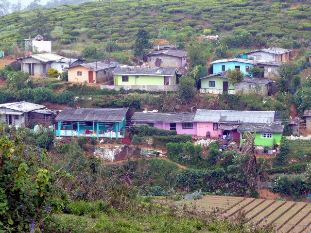 large_Tea_picker_houses.jpg