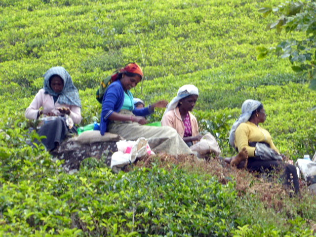 large_Tea_pickers.jpg