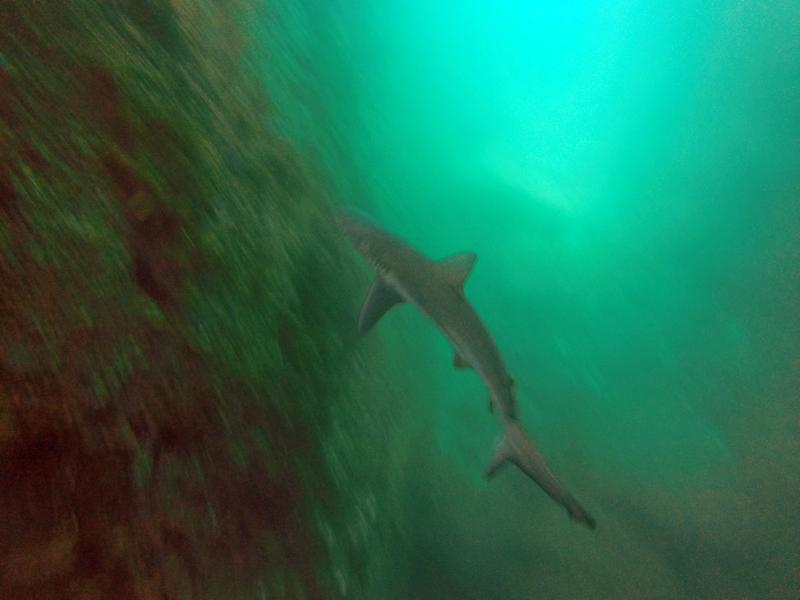 large_shark_ahoy.jpg