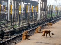 Monkeys_on_platform.jpg