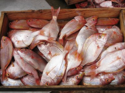Fishies, Jeju