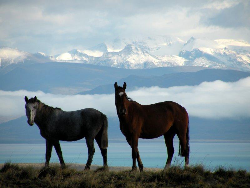 Raof Trip - Horses