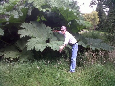 The largest leaves we have ever seen.