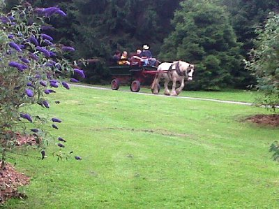 """One could take a slow ride around the park in a trap.....as the more """"well-fed"""" visitors would be inclined to do!"""