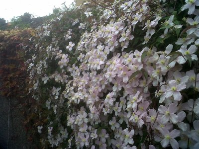 Another display of flowers adorning a wall.