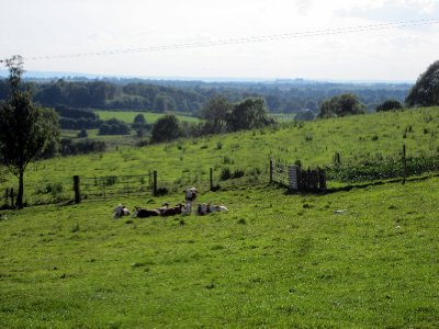 Afternoon siesta for the calves with the glorious Irish hills beyond