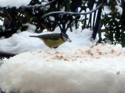 Feeding the hungry birds with muesli.