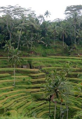 Bali002.jpg