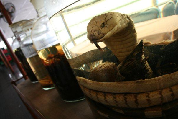 Can Tho Snake Wine