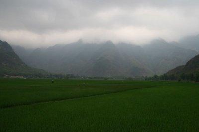 rice_paddies_4.jpg