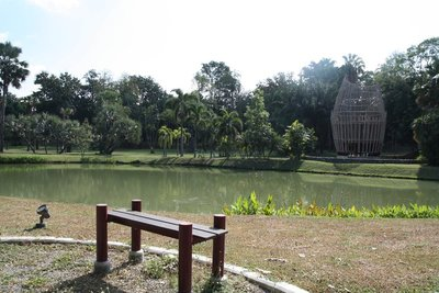 Pond - Chiang Mai University